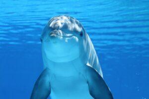dolphin, animal, sea-203875.jpg