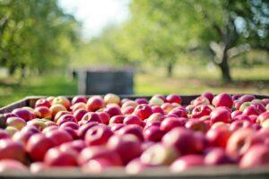 apples, fruits, farm-1004886.jpg