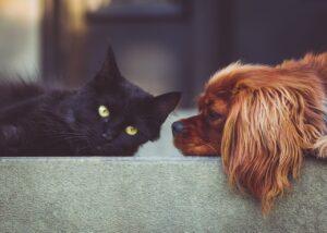 dog, cat, pets-2606759.jpg