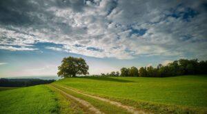 landscape, nature, tree-3688043.jpg
